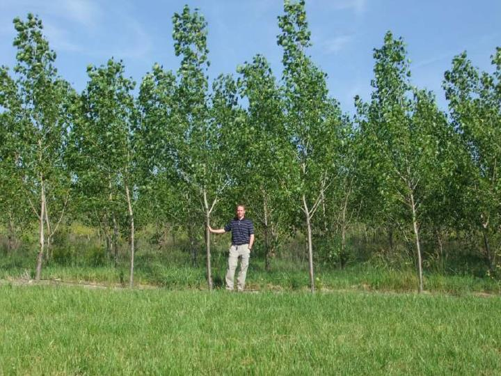 hybrid poplars � leachate management specialists